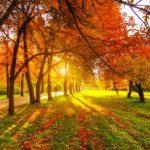 Солнечно и +12°С: погода в Кировской области на среду, 23 сентября