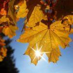 В четверг синоптики обещают жителям Кировской области до +15°С
