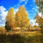 Солнечно и до +16°С: погода на 26 сентября в Кировской области