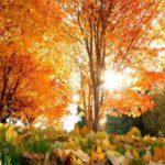 Солнечно и +16°С: погода в Кировской области на вторник, 29 сентября