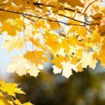 Солнечно и +16°С: погода в Кировской области на среду, 30 сентября