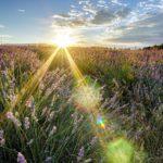 Синоптики рассказали о погоде в предстоящие выходные в Кировской области