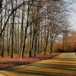 30 октября в Кировской области ожидается облачная погода, без осадков