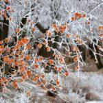 К пятнице в Кировской области может похолодать до -10°C