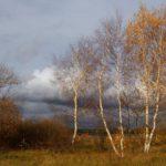16 октября жителей Кировской области ожидает прохладный и ветреный день
