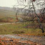 Дожди и +4°С: погода в Кировской области на вторник, 20 октября
