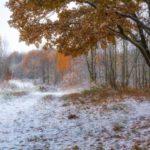 В среду, 21 октября, в Кировской области будет идти снег