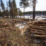 Житель Фаленского района заплатит более 1 млн рублей за незаконную рубку леса
