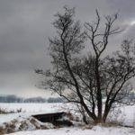 Пасмурно и -1°С днем: погода в Кировской области на субботу, 21 ноября