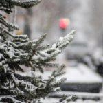 23 ноября жителей Кировской области ожидает снежный день