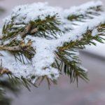 Жителей Кировской области ожидает снежная неделя