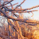 Из-за аномально холодной погоды на юго-востоке Кировской области объявлено метеопредупреждение
