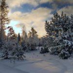 Синоптики рассказали, какая погода ожидает жителей Кировской области во вторник, 15 декабря