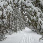21 декабря в Кировской области потеплеет до -1℃