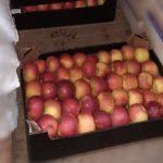 В Кирове раздавили 248 кг яблок неизвестного происхождения