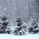 В Кировской области объявлено метеопредупреждение из-за снегопадов и ветра