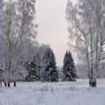 Пасмурно и -4°С днем: погода в Кировской области в понедельник, 4 января