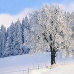 Синоптики рассказали, какая погода ожидает жителей Кировской области в воскресенье, 17 января