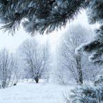 Пасмурно и -2°С днем: погода в Кировской области на вторник, 26 января