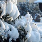 6 января в Кировской области ожидается снежный день