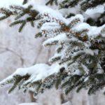 Синоптики рассказали, какая погода ожидает жителей Кировской области в субботу, 9 января
