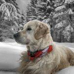 Жителей Кировской области обязали регистрировать домашних животных