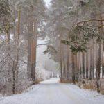 20 февраля жителей Кировской области ждет морозный, без осадков день