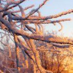 В Кировской области объявлено метеопредупреждение из-за сильных морозов