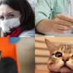 Итоги недели: коронавирус, череда дистанционных мошенничеств и новые требования к содержанию домашних животных в Кировской области