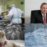 Итоги недели: коронавирус в Кировской области, череда коррупционных дел и регистрация домашних животных