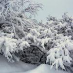 Снег и -18°С днем: погода в Кировской области на пятницу, 19 февраля