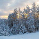 8 февраля в Кировской области похолодает до -29℃