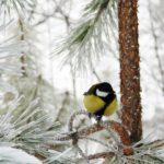 Синоптики рассказали, какая погода ожидает жителей Кировской области в воскресенье, 14 февраля